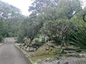 Taman Mexico
